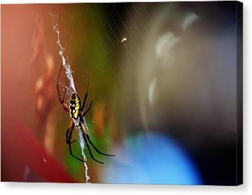 Beautiful Spider Canvas Print by Adam LeCroy
