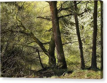 Beautiful Spring Trees Canvas Print