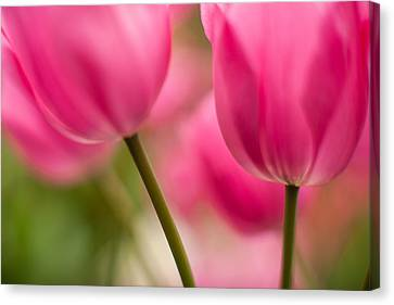 Beautiful Stems Canvas Print by Mike Reid