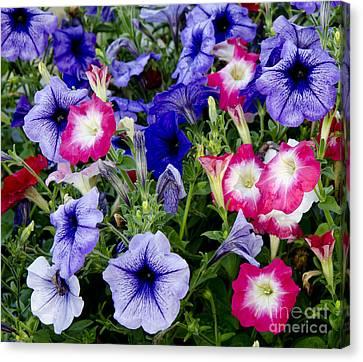 Beautiful Summer Annuals Canvas Print by Wilma  Birdwell