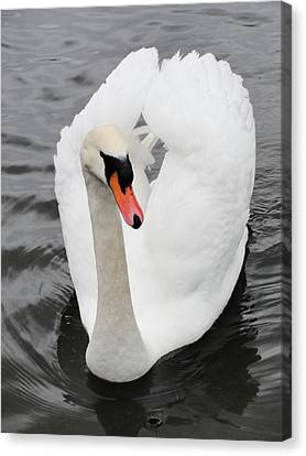 Canvas Print featuring the photograph Beautiful Swan by Tiffany Erdman