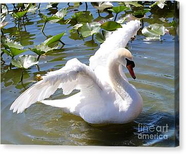 Glassy Wing Canvas Print - Beautiful Swan Wings by Carol Groenen