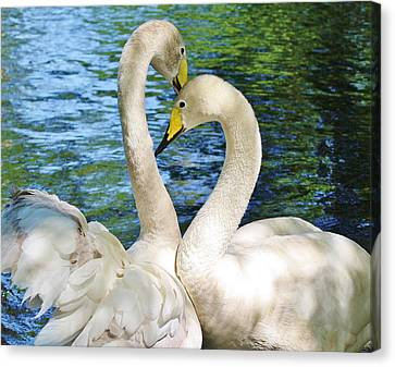 Beautiful Swans Canvas Print by Paulette Thomas