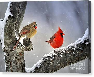 Cardinal Canvas Print - Beautiful Together by Nava Thompson