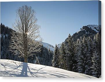 Beautiful Tree In Snowy Landscape On A Sunny Winter Day Canvas Print by Matthias Hauser