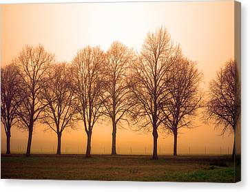 Beautiful Trees In The Fall Canvas Print by Tommytechno Sweden