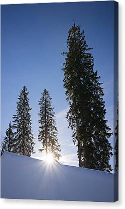 Beautiful Trees On A Sunny Winter Day Canvas Print by Matthias Hauser