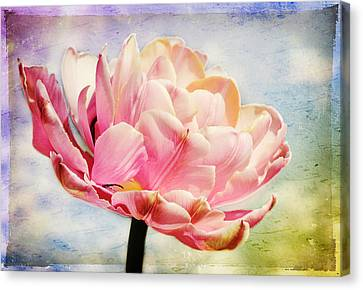 Canvas Print featuring the photograph Beautiful Tulip by Trina  Ansel