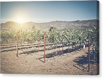 Beautiful Vineyard In Napa Valley With Retro Instagram Film Styl Canvas Print