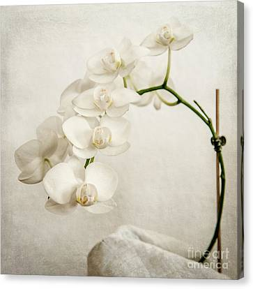 Hannes Cmarits Canvas Print - Beautiful White Orchid II by Hannes Cmarits