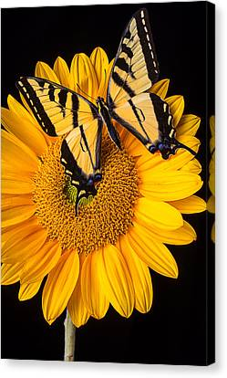 Beautiful Wings On Sunflower Canvas Print