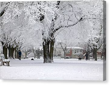 Beautiful Winter Park Canvas Print by Charline Xia