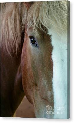 Beautiful Within Him Was The Spirit - 2 Canvas Print by Linda Shafer