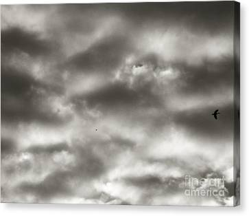 Beauty Above Us Canvas Print by Robyn King