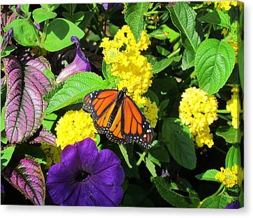 Canvas Print featuring the photograph Beauty All Around by Cynthia Guinn