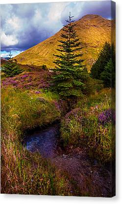 Fir Trees Canvas Print - Beauty All Around. Rest And Be Thankful. Scotland by Jenny Rainbow