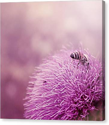 Beauty And The Bee Canvas Print by Trish Mistric
