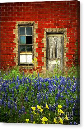 Beauty And The Door - Texas Bluebonnets Wildflowers Landscape Door Flowers Canvas Print by Jon Holiday