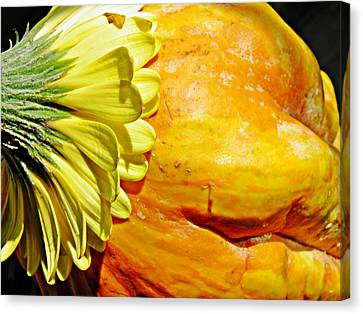 Beauty And The Squash 3 Canvas Print by Sarah Loft