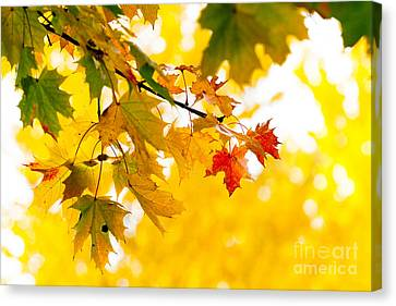 beauty Autumn Leaves Canvas Print by Boon Mee