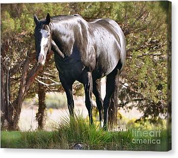 Canvas Print featuring the photograph Beauty by Barbara Dudley