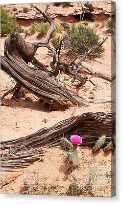 Beauty Blooming Canvas Print by Bob and Nancy Kendrick