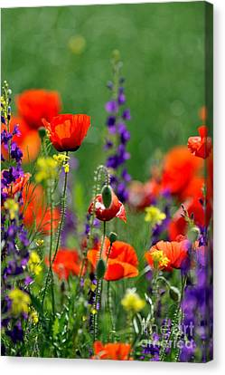 Beauty Colorful Flowers Canvas Print