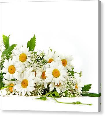 Beauty Daisy Flowers Canvas Print