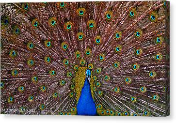 Canvas Print featuring the pyrography Beauty by Elaine Malott