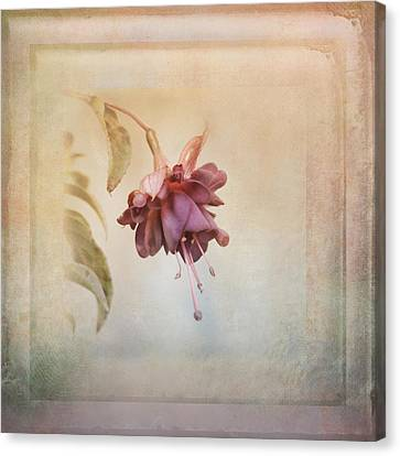 Beauty Fades Softly Framed Canvas Print by Susan Capuano