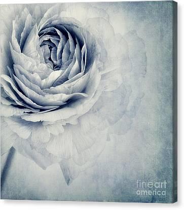 Beauty In Blue Canvas Print by Priska Wettstein