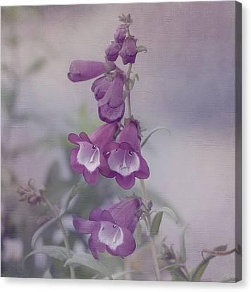 Beauty In Purple Canvas Print by Kim Hojnacki