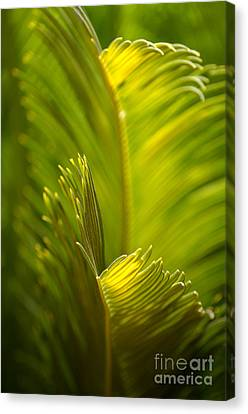 Beauty In The Sunlight Canvas Print by Deb Halloran