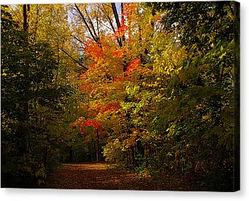 Beauty In The Woods Canvas Print by Jocelyne Choquette