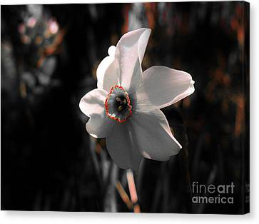 Canvas Print featuring the photograph Beauty In The Woods by Sherman Perry