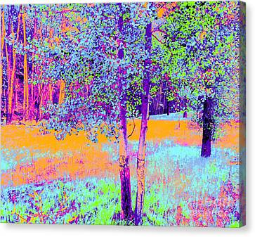 Beauty Of An Aspen Grove Canvas Print by Ann Johndro-Collins