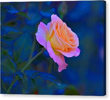 Flower 9 Canvas Print