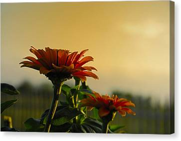 Beauty Of Nature Canvas Print by Charles Beeler