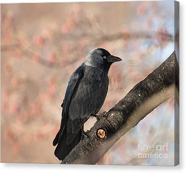 Canvas Print featuring the photograph Beauty Of Nature by Rose-Maries Pictures