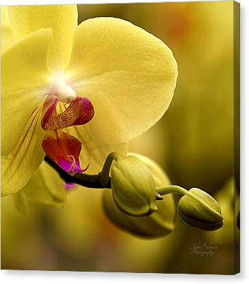 Beauty Of Orchids 2 Canvas Print by Julie Palencia
