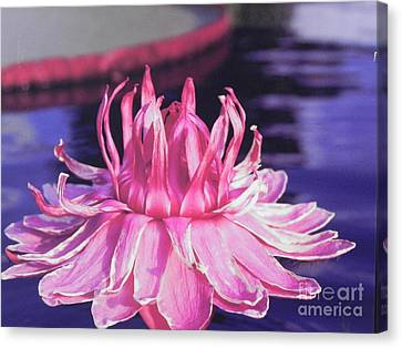 Canvas Print featuring the photograph Beauty Of Pink At The Ny Botanical Gardens by Chrisann Ellis