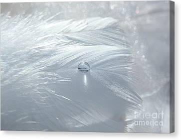 Beauty Of White Canvas Print by Krissy Katsimbras