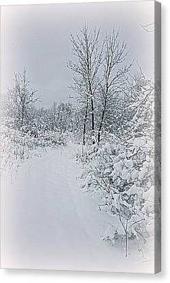 Beauty Of Winter Canvas Print by Kay Novy