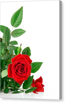 Beauty Red Roses Canvas Print by Boon Mee