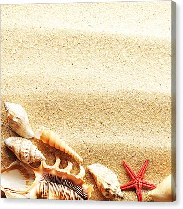 Beauty Sea Shell Canvas Print by Boon Mee