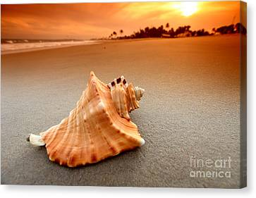 Beauty Shell Canvas Print by Boon Mee