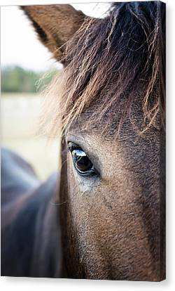 Beauty Canvas Print by Swift Family
