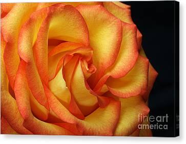 Beauty Unfolds Canvas Print