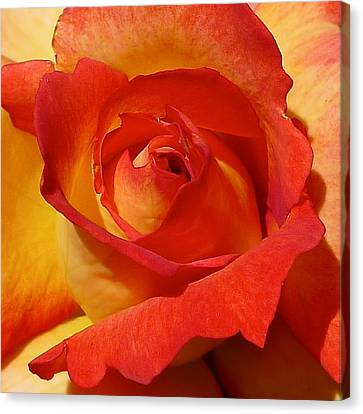 Beauty Unfurled Canvas Print by Denise Mazzocco