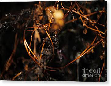 Canvas Print featuring the photograph Rembrandt Lighting by Maja Sokolowska